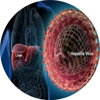 Hepatitiscircle